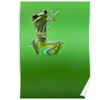 Hello Froggy Poster