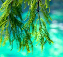 Cypress Leaves Sticker