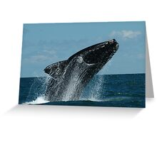 Right whale in  Argentina Greeting Card