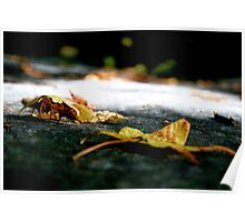 Leaves in the Fall Poster