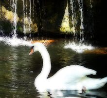 Swan Glide by Sunflwrconcepts
