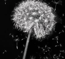 Dandelion dream by Sheri Nye