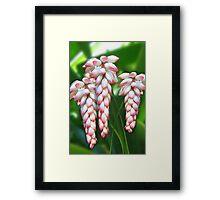Hawaiian Shell Ginger Flowers Framed Print