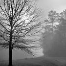 Morning Fog by ©Dawne M. Dunton