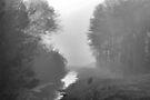 Beyond The Creek by ©Dawne M. Dunton