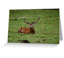 Deer at Studley Royal Greeting Card