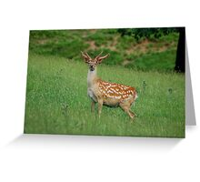 Stag at Studley Greeting Card