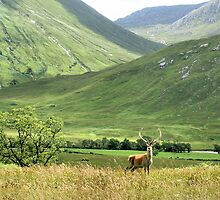 Monarch of the Glen 2  by Cat Perkinton