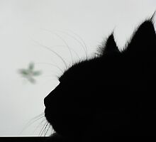 Stormy cat by narabia