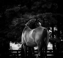 Dark Horse II by Heather Last