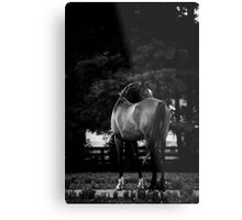 Dark Horse II Metal Print