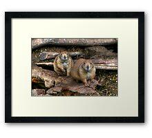 Chubby Pair Framed Print