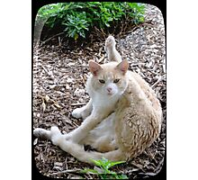 Buddy the Cat Photographic Print