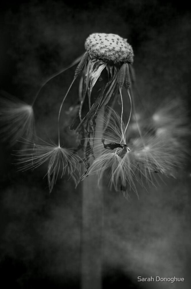 Alone by Sarah Donoghue