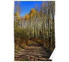 Lined Path Poster