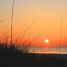 Good Day Sunshine by ©Dawne M. Dunton