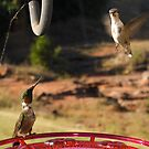 """""""STAY AWAY FROM THE FEEDER"""" by Dennis Jones - CameraView"""