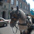 Paard by Heather Harvie