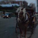 Pferd by Heather Harvie