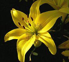 Golden Sunshine by Nancy Polanski