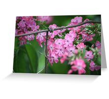 Blooms on a Wire... Fence That Is!! Greeting Card