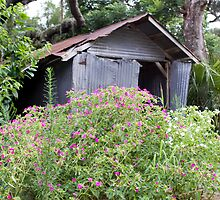 shed n flowers by Ted Petrovits