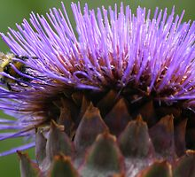 Raider of the Globe Artichoke by Wayne Gerard Trotman
