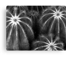 Cacti in Monochrome Canvas Print