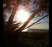 Delaware Bay Sunset by eyly