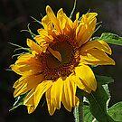 Flower Under The Sun by saseoche