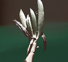 FOUR FINGERS by Paul Quixote Alleyne