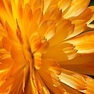 Petals by Maryanne Lawrence