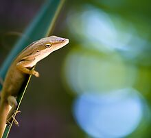 Lizard Bokeh by Jose O. Mediavilla
