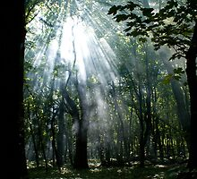 forest rays by Yuriy Netesov