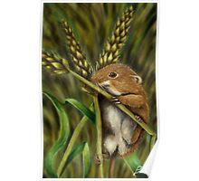 Topolino delle risaie Poster