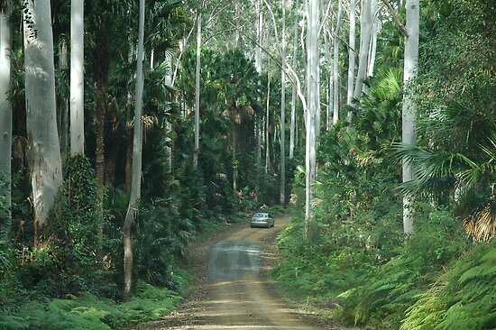 Wallingat State Forest Drive NSW Australia by Phil Woodman