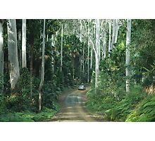 Wallingat State Forest Drive NSW Australia Photographic Print