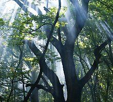 forest rays 2 by Yuriy Netesov