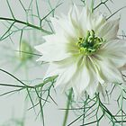 Love in a mist by Mike Finley