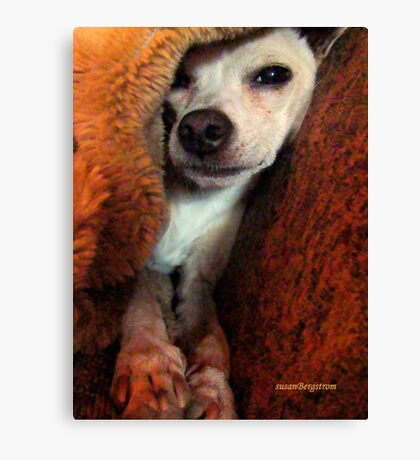 Lil' Bit And His Blankie #3...Just Trying To Be A Happy Guy Canvas Print