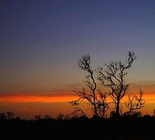 "Australia: ""Outback Dawn"", Northern Territory by Kelly Sutherland"