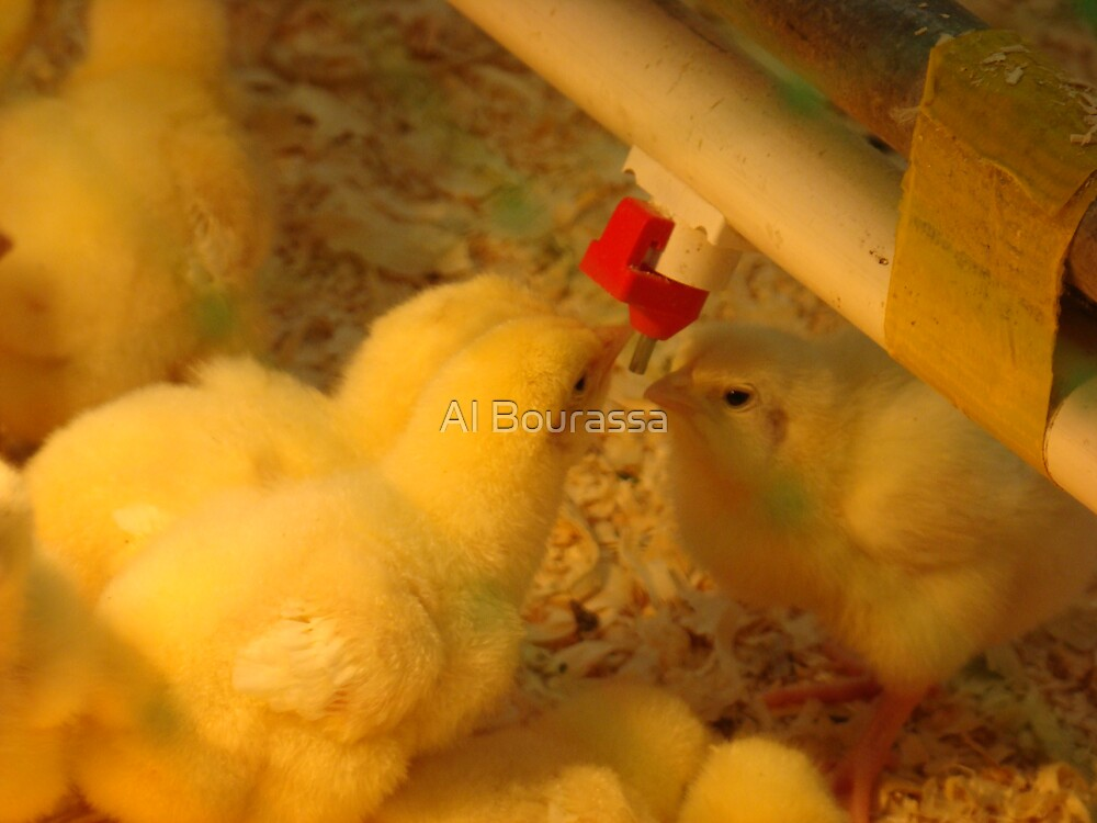 Sexy Chicks by Al Bourassa