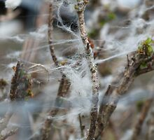 Inishowen Landscape - Wool Fence by jecate