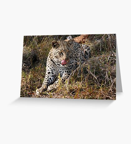 She's so sneaky - Female leopard, Okavango Delta Greeting Card