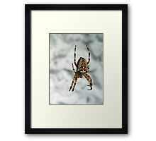 It's a spider, man... Framed Print