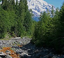 Mt. Rainier at Kautz Creek by Barb White