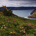 Majestic Newfoundland by Brian Carey