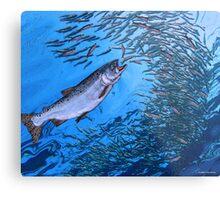 Chinook Salmon Metal Print
