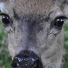 Eyes of a deer: face-to-deer face 2 by Lenny La Rue, IPA