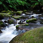 Toorongo River  by KeepsakesPhotography Michael Rowley